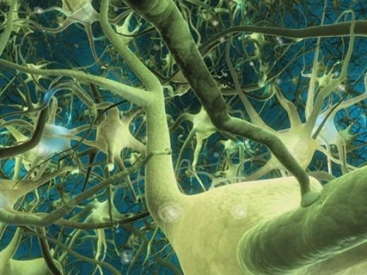 Neurons-1